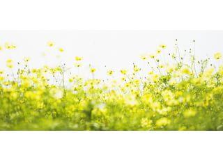 花畑クリニック